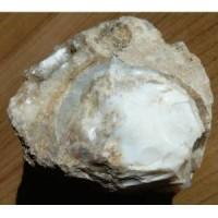Süt Opal