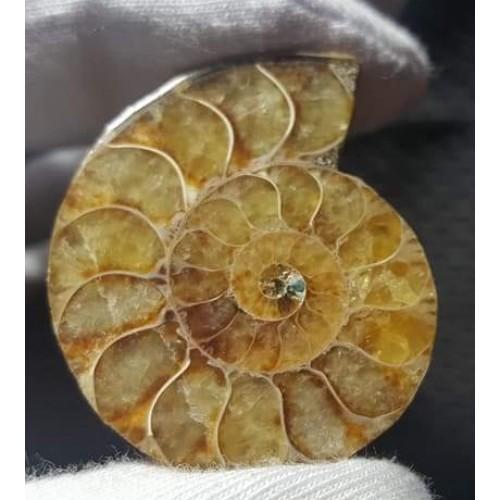 Ammonit Fosili