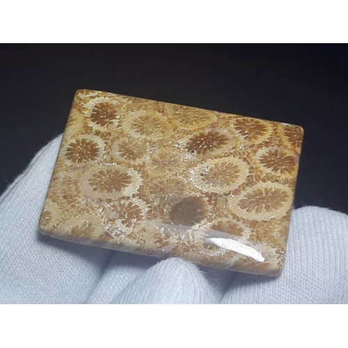 Mercan Fosili Kabaşon