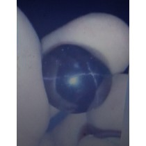Star Garnet